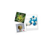 GMP Factory Tribulus Terrestris Extract /Tribulus Terrestris Capsules Tribulus Saponins 90%