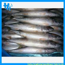 Whole round frozen pacific mackerel prices