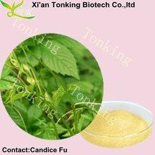 100% jiaogulan natural extracto de la hierba 20% ~98% gypenosides( gynostemma pentaphyllum extracto)