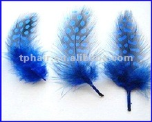 Wholesale Blue Colored Chicken Feather Extensions 2012