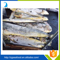Best Quality Sea Frozen Mahi Mahi Fish