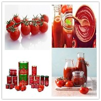 wholesale tomato paste processing plant