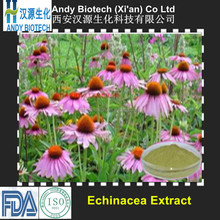 Low Price 4% UV Polyphenols Natural Echinacea Purpurea Extract