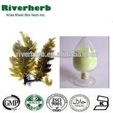 Natural extracto de algas marinas 40% fucoxantina
