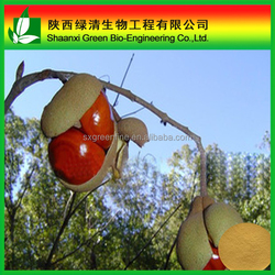 Horse Chestnut Herbal Extract/100% Natural Horse Chestnut Aescin P.e. 20% Cas No.6805-41-0 Horse Chestnut Extract