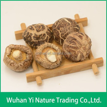 Cultivated Source and Dried Champignon Mushrooms