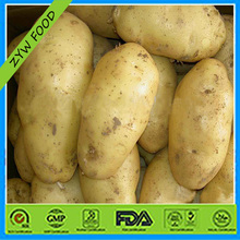 fresh potato importers in dubai
