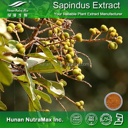 Chinese Soapberry Fruit Extract, Chinese Soapberry Fruit Extract Powder, Chinese Soapberry Fruit P.E.