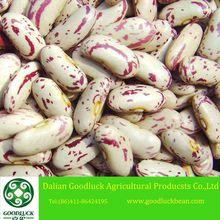 New Crop Red Speckled Sugar Beans