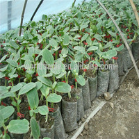 Hot sales for planting packaging! Small plastic plant seed bag, breeding bag
