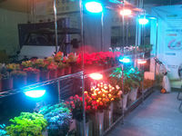 Wholesales professional xpes grow light full spectrum scientific names of flower