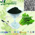 Pigmento natural verde/natural clorofilina spinacia en polvo extracto