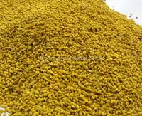 sweet rape bee pollen