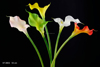 53 cm PVC Real Touch Calla Lily Spray Artificial Flower