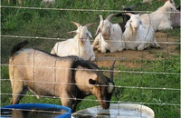 Galvanized sheep fence and cattle fence