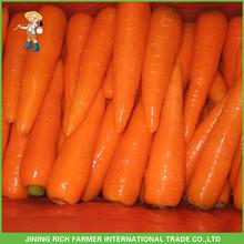 2015 Import Chinese Fresh Baby Carrot
