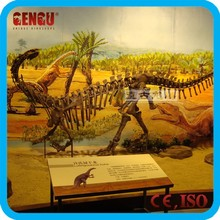 2012 Dinosaur Skeletons Replicas for Indoor Exhibition