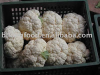 2015 new crop fresh cauliflower (chinese)
