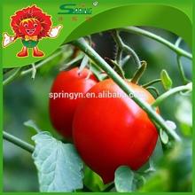 2015 Hot venta tomates Cherry frescos crystal tomate chino tomate