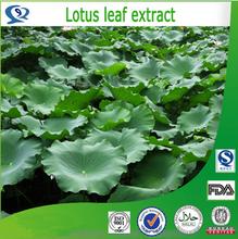Natural 2% nuciferine lotus leaf extract powder ,HACCP Kosher FDA lotus leaf extract,flavones lotus leaf extract