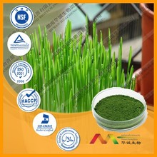 NSF-GMP Supplier provide health products Wheat grass Extract powder