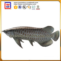 home decorative fish and gold arowana fish for sale