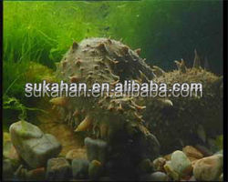 compound enzyme uses for sea cucumber to reduce cost of feed formulation
