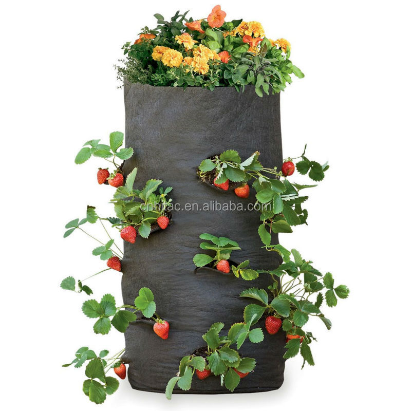 how to grow hanging strawberries