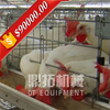 Full automatic equipment A type poultry house automatic chicken layer cage for sale in philippines