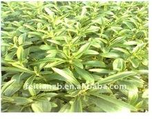 Stevia sugar Rebaudioside A 50% (RA)