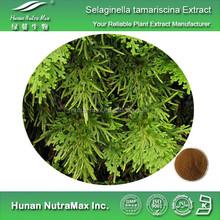 Pure Selaginella tarmariscina spring Extract Powder 5:1 10:1