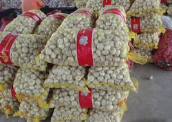 Fresh Natural Garlic Wholesale White Garlic with best garlic price