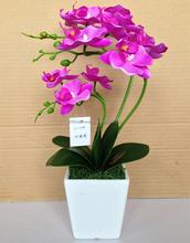 Como visto na tv produtos phalaenopsis flor atacado orquídeas
