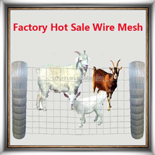 High quality sheep fence netting(hot sale)