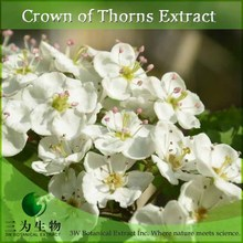 High Quality Crown of Thorns Extract from China