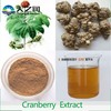 factory price Siberian Ginseng P.E. with high quality