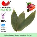 la fuente de la fábrica de origen de la venta directa de sushi de la decoración y embalaje herramientas de hojas de bambú fresco