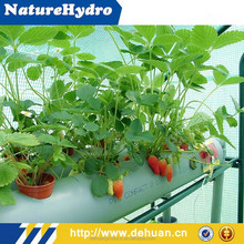 Hydroponics Growing Equipment in Agriculture