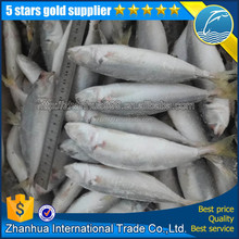 High quality frozen round scad decapterus maruadsi/rachurus japanicus horse mackerel