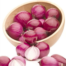 Shandong onion factory 2015 harvest red onion hot sale