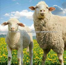Keep your sheep farm healthy