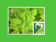 Standardized manufacture Salvia Miltiorrhiza P.E .Extract by factory