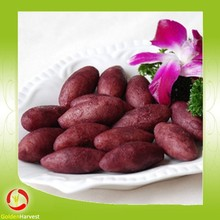 2015 high quality fresh sweet potato sweet potato buyers from China factory