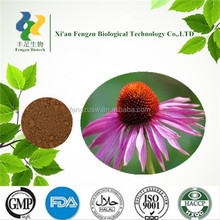 100% Natural Plant Extract Echinacea Extract