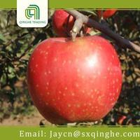 good quality fresh apple fruit apple shaaxi apple