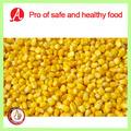 conservas de congelados grano de maíz dulce