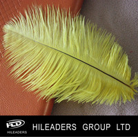 RT3251 Wholesale Ostrich Feather Bird Feathers Sale