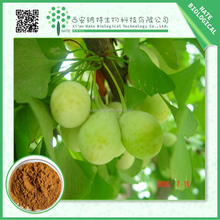 Ginkgo biloba leaf extract Bilobalides extract and Ginkgolides extract powder Ginkgolic Acid less than 5ppm from honest supplier