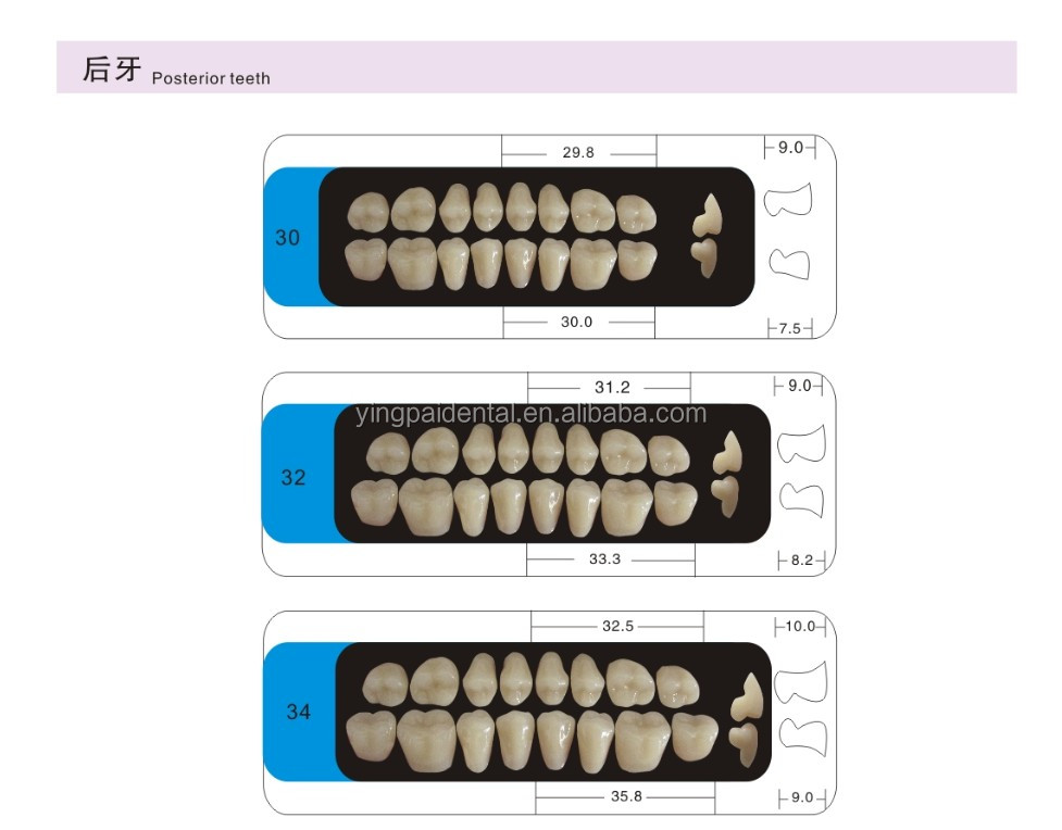 Manufacturer of synthetic resin teeth /false teeth/composite teeth with lower price