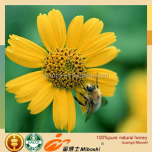 professional supply high quality raw and wild rainforest honey
